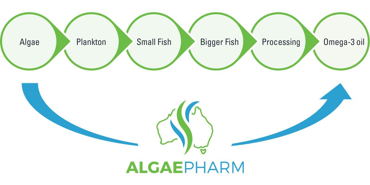 Algae Pharm Production Process